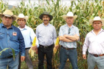 Ha beneficiado Agricultura Sustentable a más de 10 mil familias de productores
