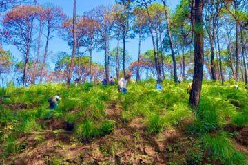 Más de 106 mil pinos plantados dentro del Programa Municipal de Reforestación 2021